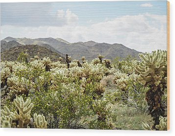 Cactus Paradise Wood Print by Amyn Nasser