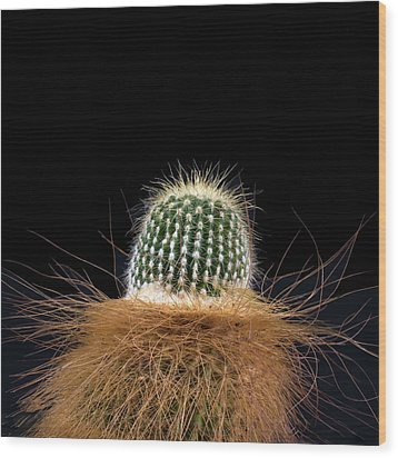 Cactus Photo Wood Print by Catherine Lau