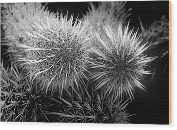Wood Print featuring the photograph Cactus Spines by Phyllis Denton