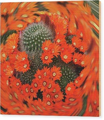 Cactus Swirl Wood Print