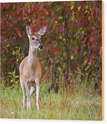 Wood Print featuring the photograph Cades Cove Doe by Bob Decker