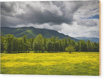 Cades Cove Great Smoky Mountains National Park Tn - Fields Of Gold Wood Print by Dave Allen