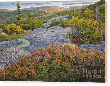 Cadillac Rock Garden Wood Print by Susan Cole Kelly
