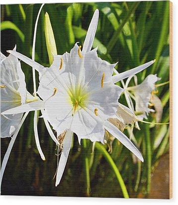 Cahaba Lily Wood Print by Fred Baird