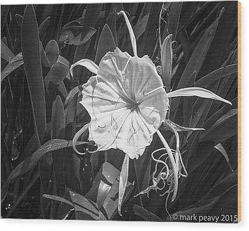 Cahaba Lily Wood Print