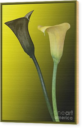 Cala Lilies Opposites Wood Print by Shirley Mangini