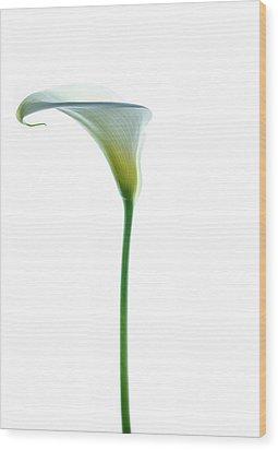 Cala Single Color Wood Print by Rebecca Cozart