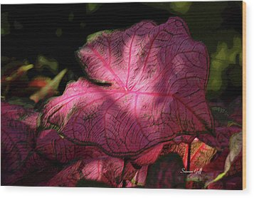 Caladium Mystery Wood Print by Suzanne Gaff