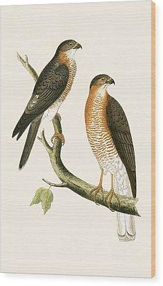 Calcutta Sparrow Hawk Wood Print by English School