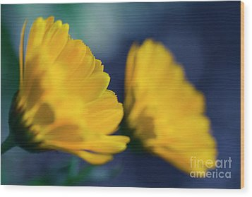 Wood Print featuring the photograph Calendula Flowers by Sharon Mau