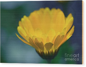 Wood Print featuring the photograph Calendula by Sharon Mau