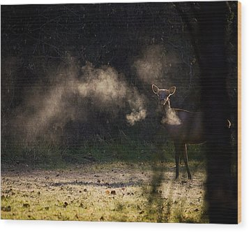 Wood Print featuring the photograph Calf Elk In December by Michael Dougherty