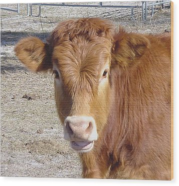 Calf Smiles Wood Print by Debbie May