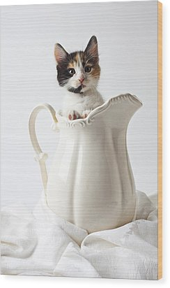 Calico Kitten In White Pitcher Wood Print by Garry Gay