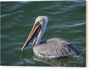 Wood Print featuring the photograph California Brown Pelican In Late Summer by Susan Wiedmann