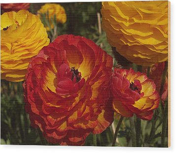California Gold Wood Print by Jean Booth