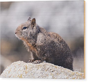 California Ground Squirrel Wood Print