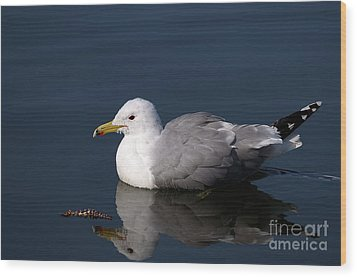 Wood Print featuring the photograph California Gull by Sharon Talson