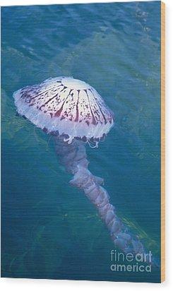 California Marine Life Wood Print by Bill Schildge - Printscapes