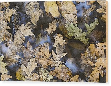 Wood Print featuring the photograph California Oak Leaves  by Sherri Meyer