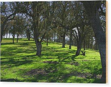 California Oak Woodland With Dappled Sunlight Wood Print
