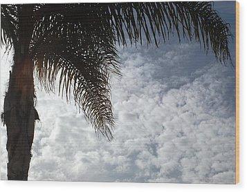 California Palm Tree Half View Wood Print