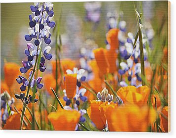California Poppies And Lupine Wood Print by Kyle Hanson