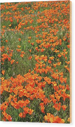 Wood Print featuring the mixed media California Poppies- Art By Linda Woods by Linda Woods