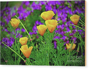 California Poppies Wood Print by Michael Cinnamond