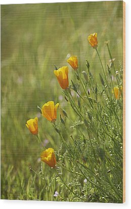 California Poppy Wood Print by Doug Herr