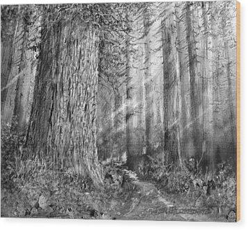 California Redwood Enchanced Wood Print by Jim Hubbard
