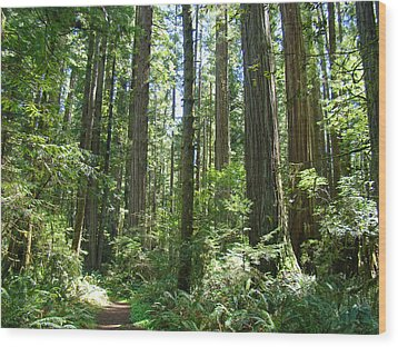 California Redwood Trees Forest Art Prints Wood Print by Baslee Troutman