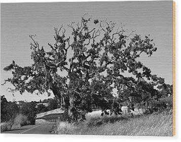 California Roadside Tree - Black And White Wood Print