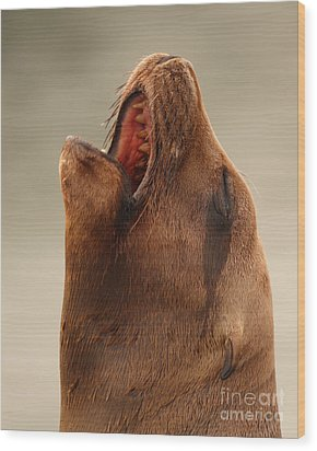 Wood Print featuring the photograph California Sea Lion Calling Out by Max Allen