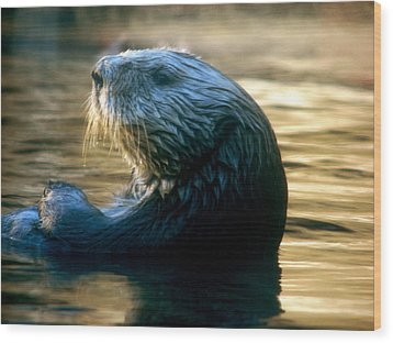 California Sea Otter Wood Print