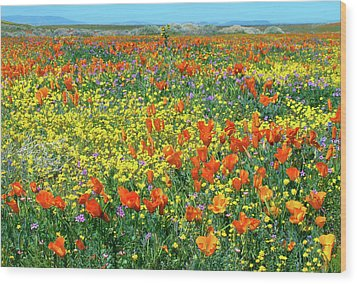 Wood Print featuring the photograph California Wildflower Super Bloom by Ram Vasudev
