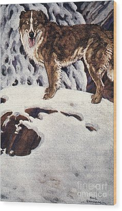 Call Of The Wild, 1903 Wood Print by Granger