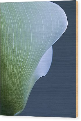 Wood Print featuring the photograph Calla Curves by Tom Vaughan