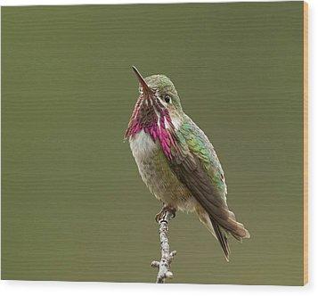Calliope Hummingbird Wood Print by Doug Herr