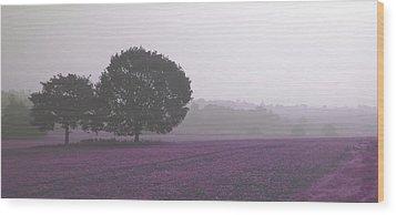 Calm Autumn Mist Wood Print