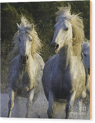 Camargue Spray Wood Print by Carol Walker