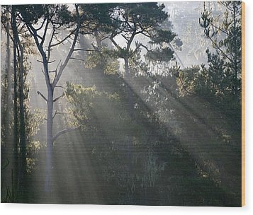 Cambria Pines Wood Print by Greg Iger
