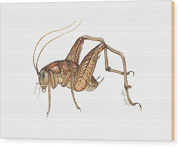 Camel Cricket Wood Print by Cindy Hitchcock