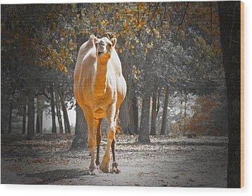 Camel Wood Print by Douglas Barnard
