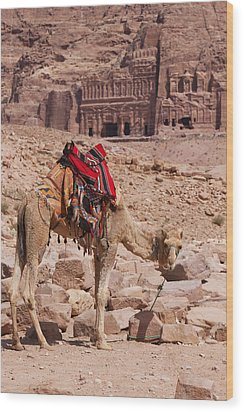 Camel In Front Of The Royal Tombs In Petra Wood Print by Martin Child