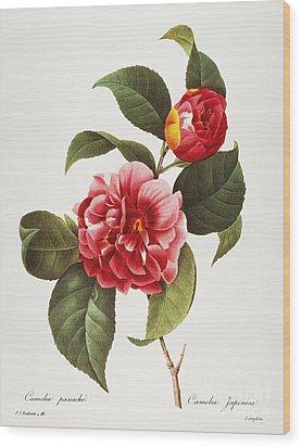 Camellia, 1833 Wood Print by Granger