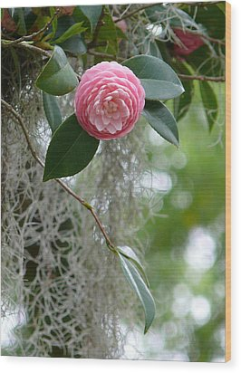 Camellia And Moss Wood Print by Jeanne  Woods