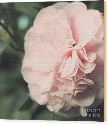 Camellia Wood Print by Cindy Garber Iverson