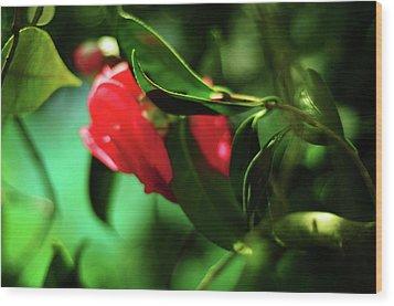 Camellia Dream Wood Print by Rebecca Sherman