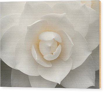 Camellia Perfection Wood Print